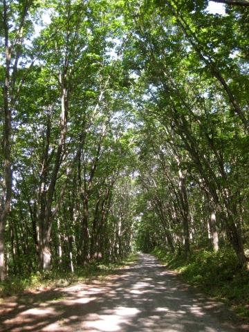 森の道0625