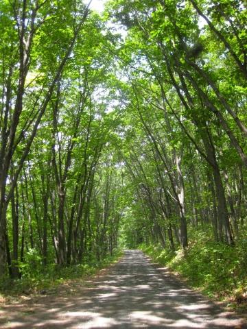 森の道縦0713