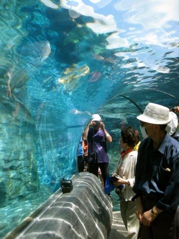 旭山動物園アザラシ0715