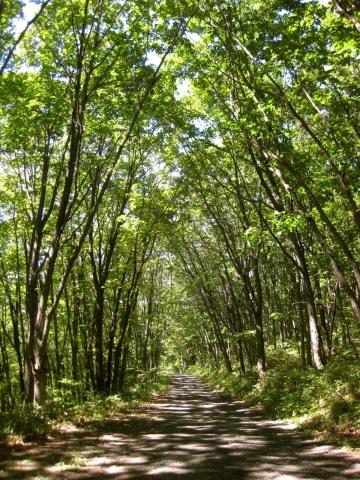 森の道0908