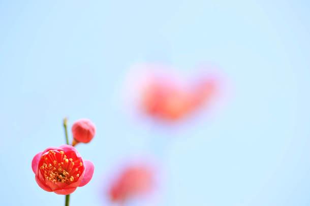 たつの 梅