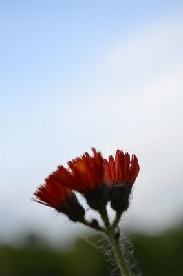20140706 白滝 (82)