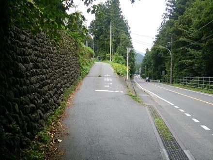 20140808_umenoki1.jpg