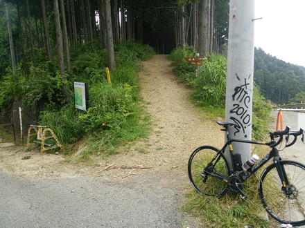 20140808_umenoki2.jpg