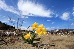 砂浜の黄色い花