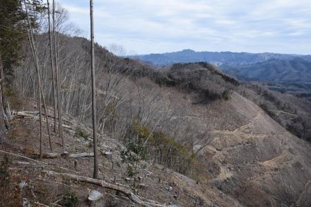 13伐採地