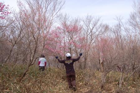 4ヤシオの森