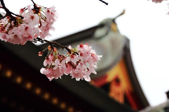 s-20140330祐徳稲荷神社1086