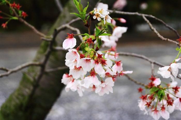s-20140330祐徳稲荷神社1005