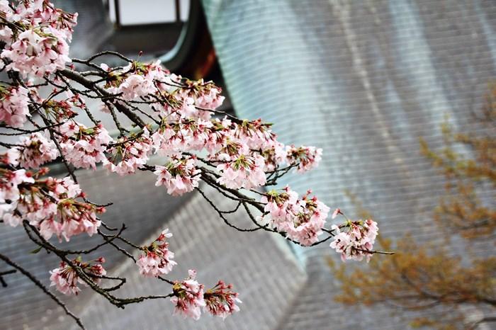s-20140330祐徳稲荷神社1082