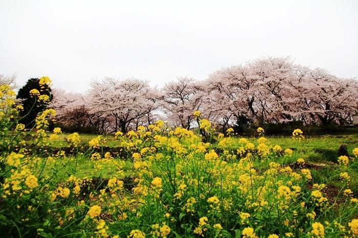 s-20140330祐徳稲荷神社1288
