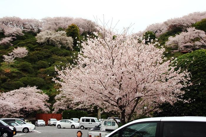 s-20140330祐徳稲荷神社1229