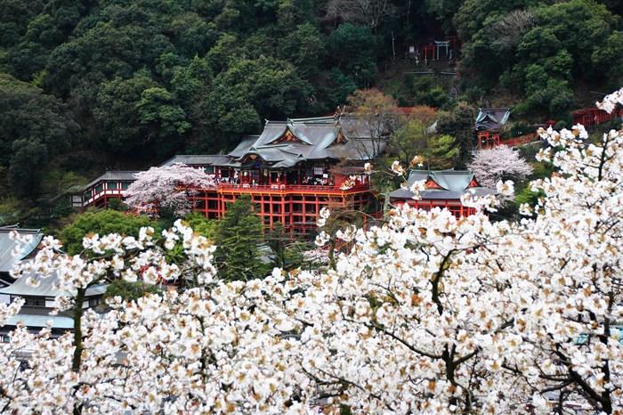 s-20140330祐徳稲荷神社1311
