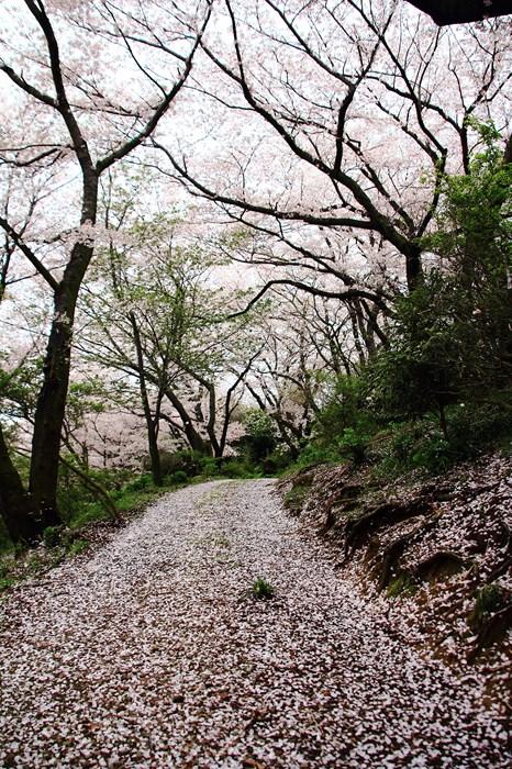 s-20140330祐徳稲荷神社1301