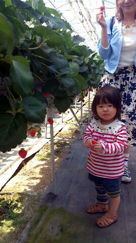 ichigo-260414.jpg