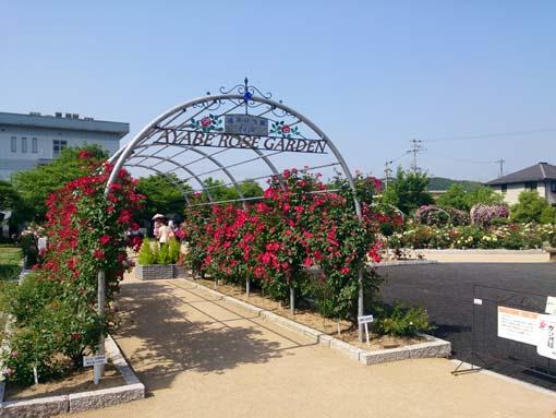 rosegarden1-260603.jpg