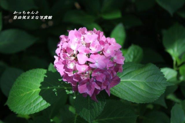 IMG_8124.jpg