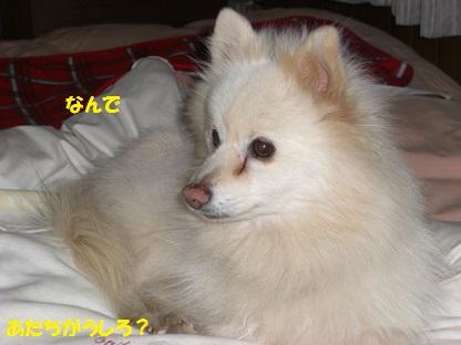 CIMG4366.jpg