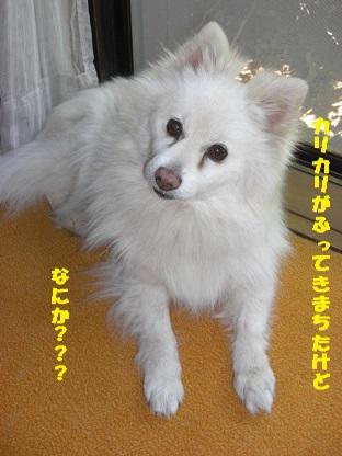 CIMG4851_20140628084353017.jpg