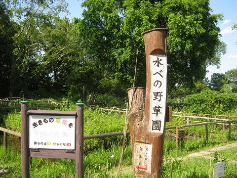 mizumoto140615-130.jpg