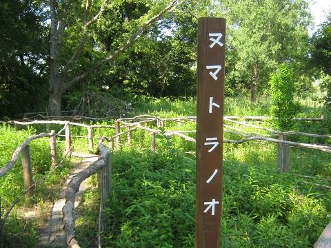 mizumoto140615-131.jpg