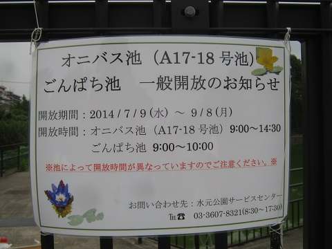 mizumoto140814-108.jpg