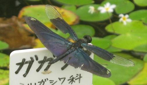 mizumoto140814-117.jpg