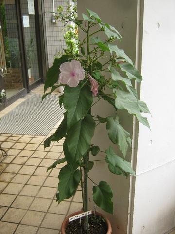 mizumoto140814-126.jpg
