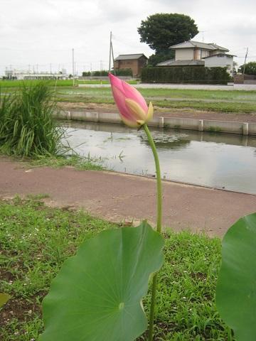 onibasu140706-108.jpg