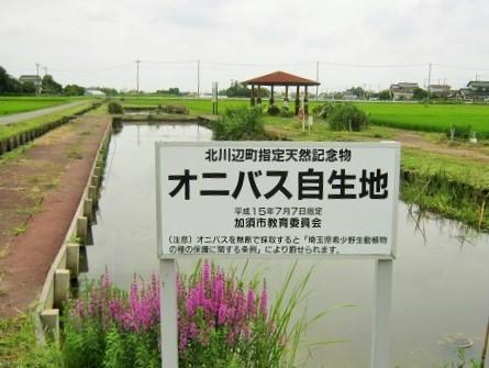onibasu140706-109.jpg