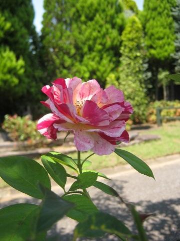 oosaki140727-104.jpg