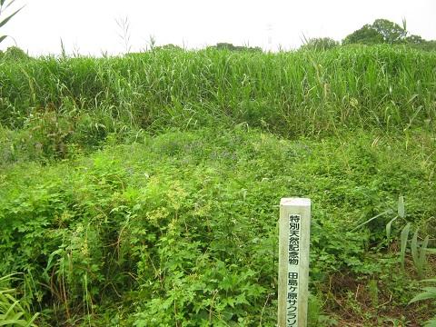 sakurasou140622-102.jpg