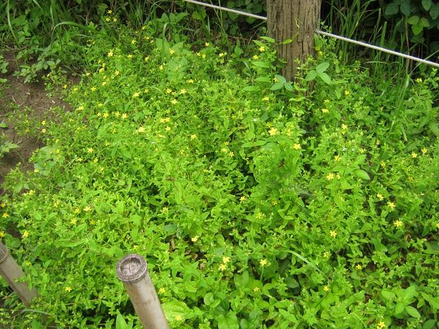 sakurasou140721-120.jpg