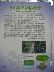 tukuba140518-111.jpg