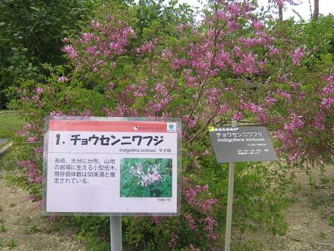 tukuba140518-131.jpg