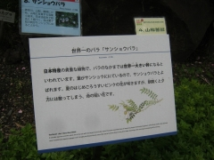 tukuba140518-138.jpg