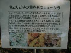 tukuba140518-175.jpg