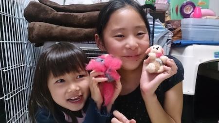 教室 羊毛アニマル