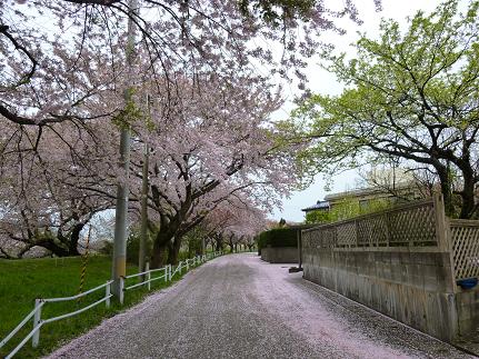 カモシカを撮影した道路
