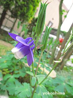 2014 5 26お花1