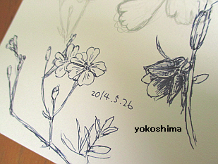2014 5 26お花の絵