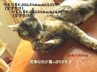 2014 6 4はな3化け猫!?