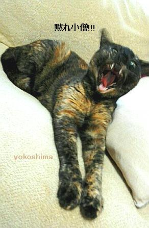 2014 9 1はなこ黙れ小僧!
