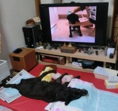 ウニ 夕方 TV