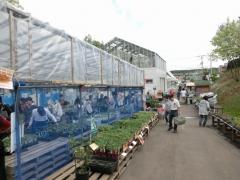 野菜の苗販売