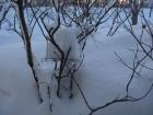 雪に埋もれたエサ台