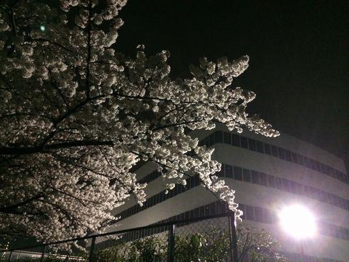 sakura in TP 20140403_04s