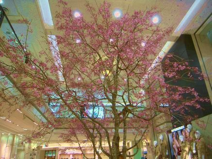 sakura in daimaru 20140405_01s