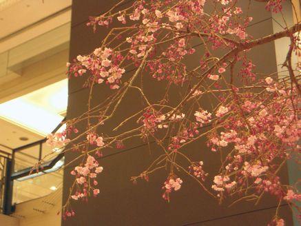 sakura in daimaru 20140405_04s