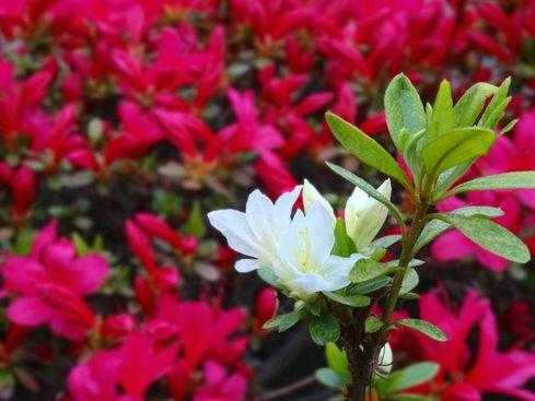 flower 20140420_14s